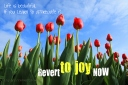Revert to joy now - 02